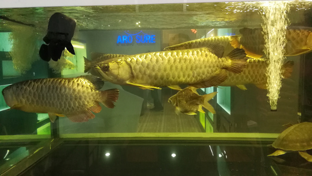 A Trip to Chatuchak Fish Market (Part 1) – The fishes at the