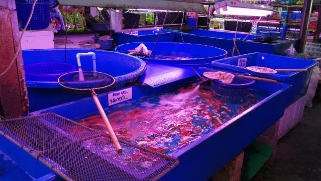 Koi shop in Chatuchak Fish Market