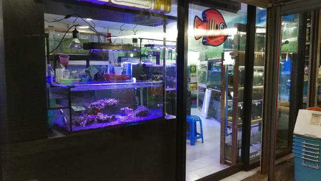 Marine Fish Shop at Chatuchak FIsh Market