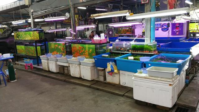 A shop at Chatuchak Fish Market