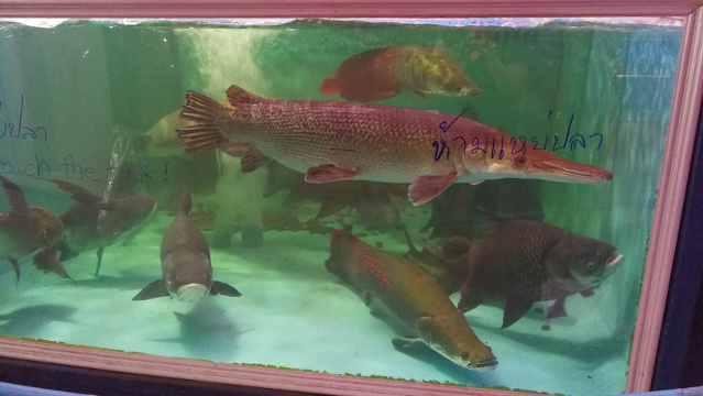 Monster Fishes