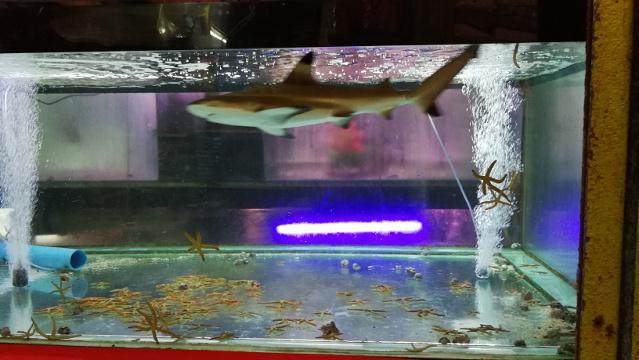 Shark at Chatuchak Fish Market