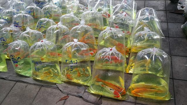 Chatuchak Fish Market - fish in bags