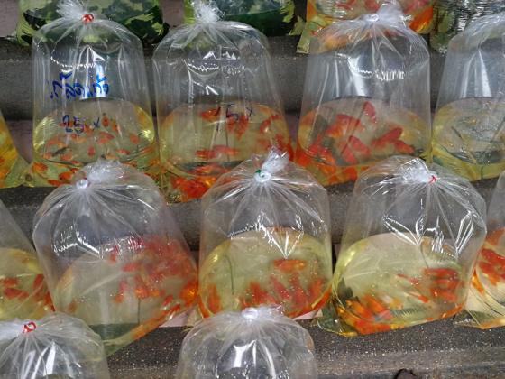 Thailand Fish Market in Bangkok
