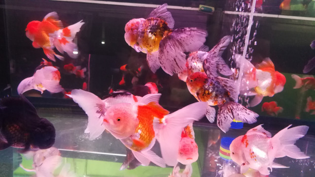 Beautiful Goldfish Tank