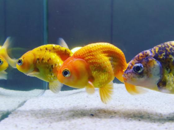 Fish tank water testing
