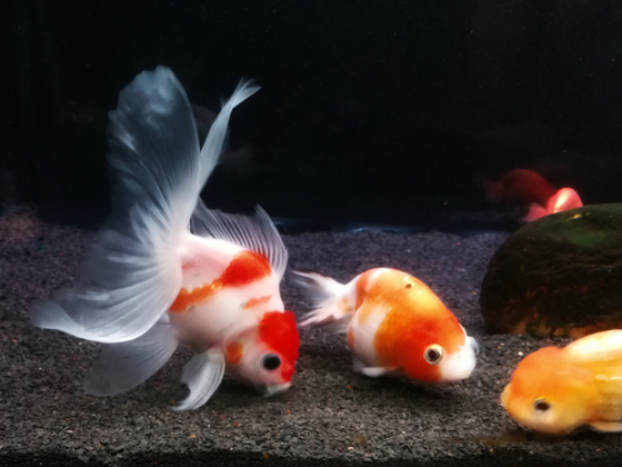 Fish Food Nutrients Label - Understanding the nutrients for your goldfish
