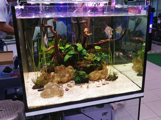 Qian Hu - Planted Tank