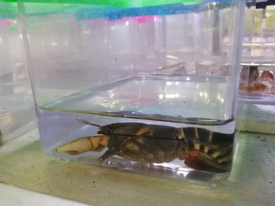 Qian Hu - Crayfish