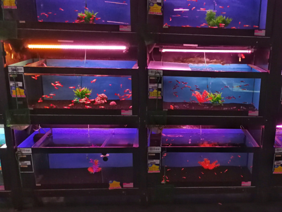 Qian Hu - Guppy Tanks